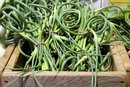 How to Freeze Garlic Scapes