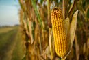 The Hidden Dangers of High-Fructose Corn Syrup