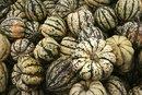 The Nutritional Values of Delicata Squash