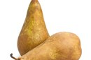 Nutritional Value of Bosc Pears