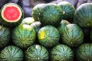 Is Watermelon Good for Health?
