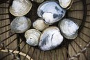 How to Steam a Quahog