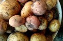 Are Green Potatoes Harmful When Eaten?