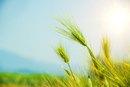 Health Benefits of Roasted Malt Barley Drinks