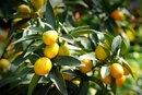 Citrus Food & Diarrhea