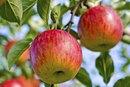 Fuji Apple Nutrition Information