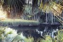 Florida Primitive Camping