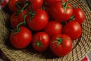 Tomato Intolerance and Digestive Symptoms
