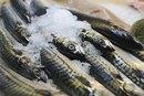 The Nutritional Value of Norwegian Mackerel