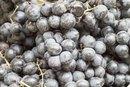 How to Make Homemade Concord Grape Juice