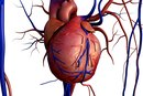 5 Major Functions of the Cardiovascular System ...