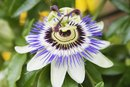 Natural Foods With Valerian & Passion Flower