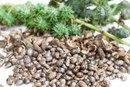 Castor Oil & Genital Warts