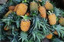 The Nutritional Difference Between Canned & Fresh Pineapple