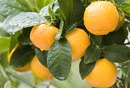 Oranges & Potassium