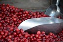 Cranberry for the Prostate