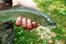 The Best Trout Fishing Locations in Pennsylvania