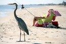 Camping At Crystal Beach Texas Livestrong Com