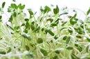 Fenugreek Sprout Nutrition