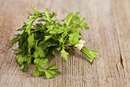 Parsley Tea and Weight Loss