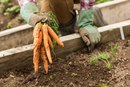 Pros & Cons of Growing Your Own Fruits & Vegetables