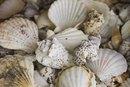 Calcium Carbonate and Seashells
