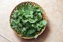 Herbal Medicines for Gallbladder