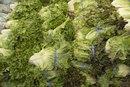 Lettuce & Food Poisoning