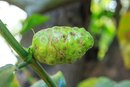 How to Prepare Noni Fruit