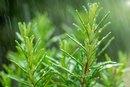 Herbs That Contain Zinc