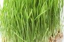Wheatgrass & Weight Loss