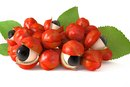 What Is Guarana Extract?