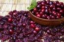 Cranberry Allergy Rash