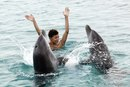Swimming With Dolphins in Tampa, Florida