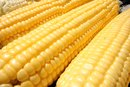 What Are the Benefits of GMO Corn?