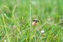 Clover Vs. Alfalfa Honey