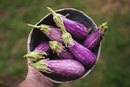 Stay Away From These Nightshade Vegetables If You Have a Sensitivity