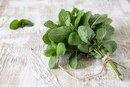 What Are the Benefits of Eating Whole Mint Leaves?