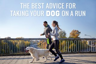 The Best Advice for Taking Your Dog on a Run