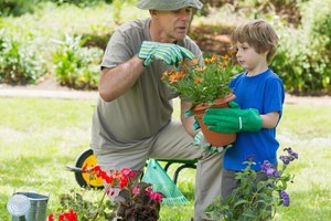 How to Teach the Steps for Planting a Flower to Kids