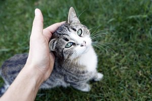 About Hives and Other Allergy Symptoms Caused by Cat Dander