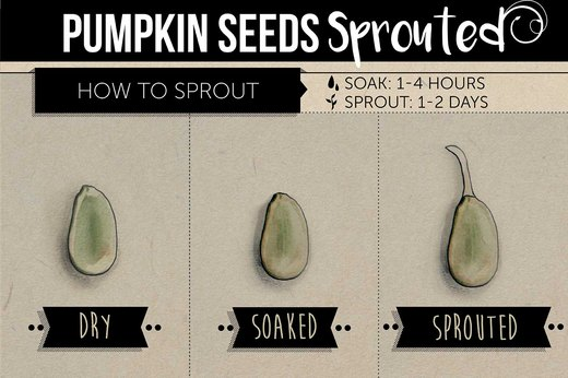 5. Pumpkin Seeds
