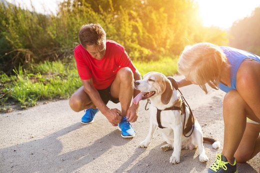 the best advice for taking your dog on a run livestrong