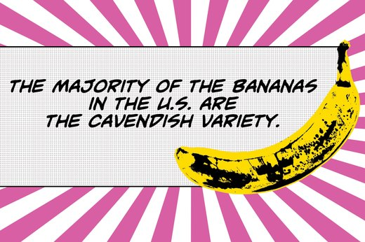 10. The Bananas Our Grandparents Ate (in the U.S.) Were Tastier
