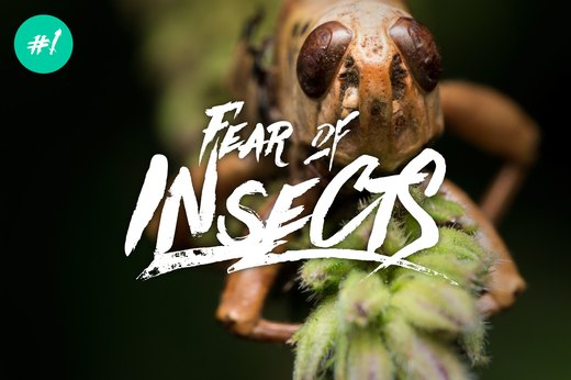 1. Fear of Insects