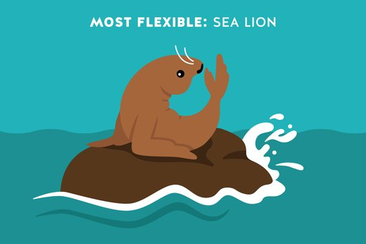 8. Most Flexible Animal: Sea Lions