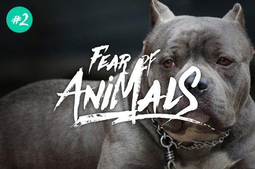 2. Fear of Animals