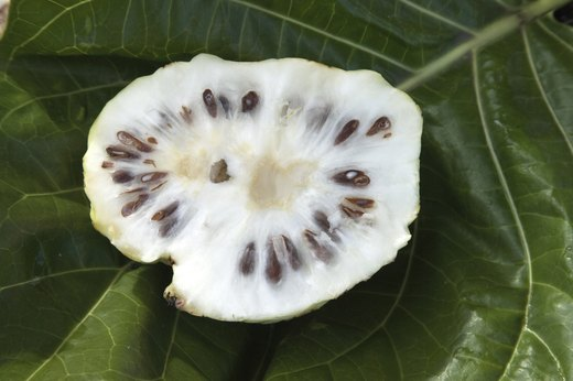 12. Noni Fruit