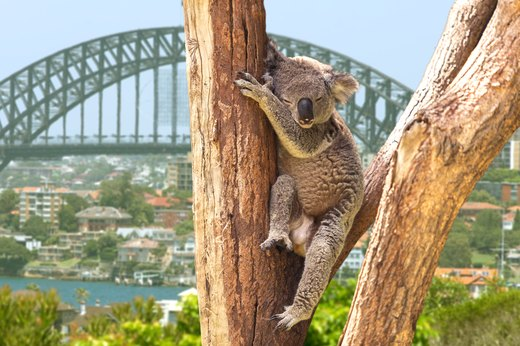 8 Seriously Cute But Dangerous Creatures to Watch Out for While Traveling